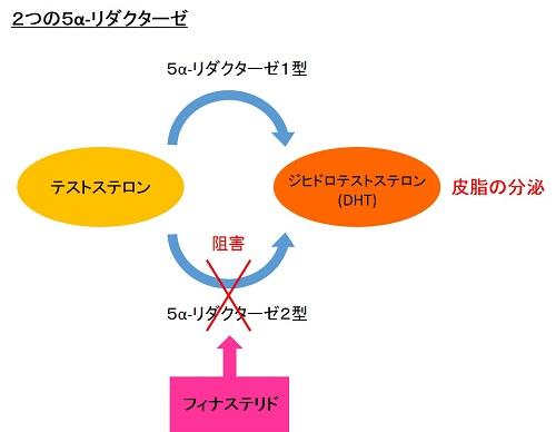 2つの5α-リダクターゼ