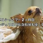 ニナゾルシャンプー2ヵ月目、コラージュフルフル泡石鹸も使ってみた。
